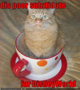 funny-pictures-cat-is-in-giant-teacup