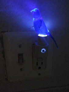 Little canary in the outlet by the light switch...